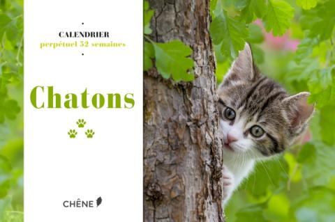 Calendrier 52 semaines Chatons